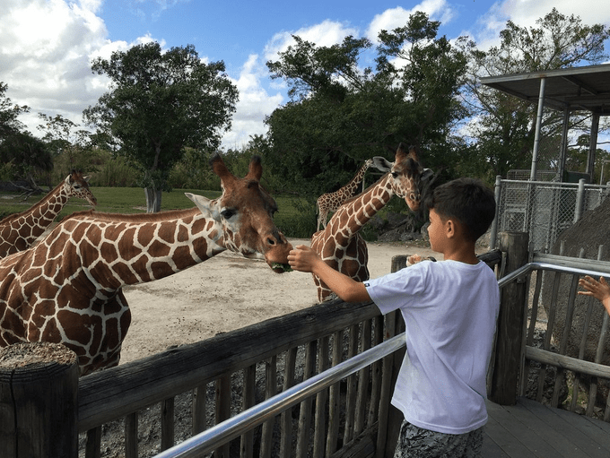 ZoológicoDeMiami3