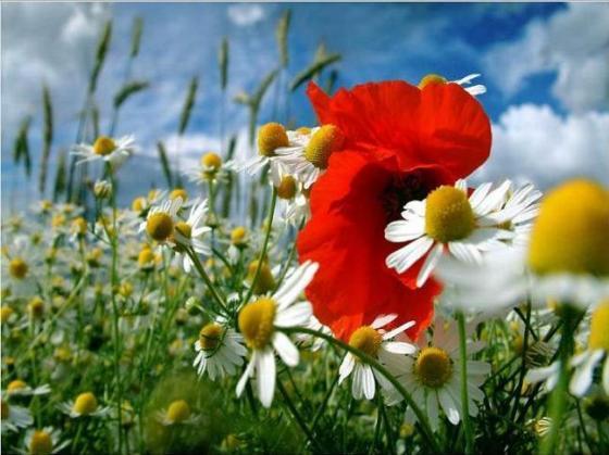 Sembrados de Nueva Vida- Campo de flores