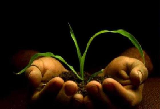 Sembrados de Nueva Vida- Planta en palma mano