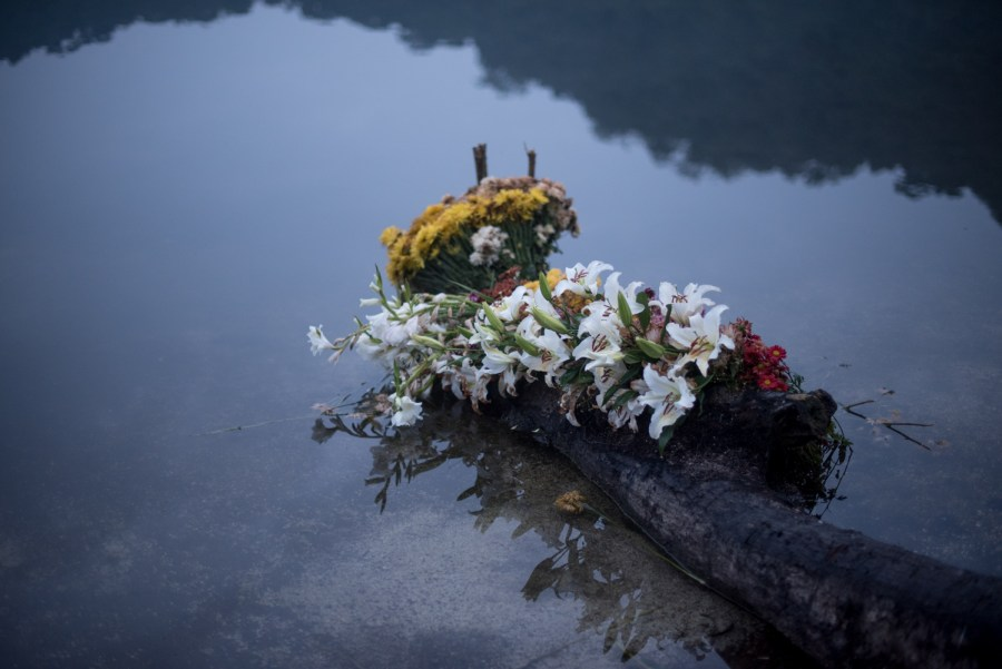 Flowers on the shores of lake Chicabal. Photo: Santiago Billy/Comvite