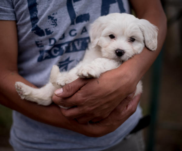 A two-month old puppy in the hands of his owner in La Antigua Guatemala. Photo: Santiago Billy/Comvite