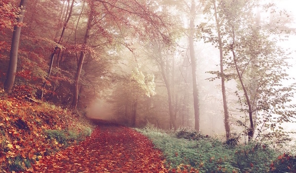 Inspiration through metaphors from nature