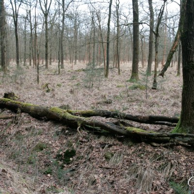 Natuurgebied Huis ter Heide