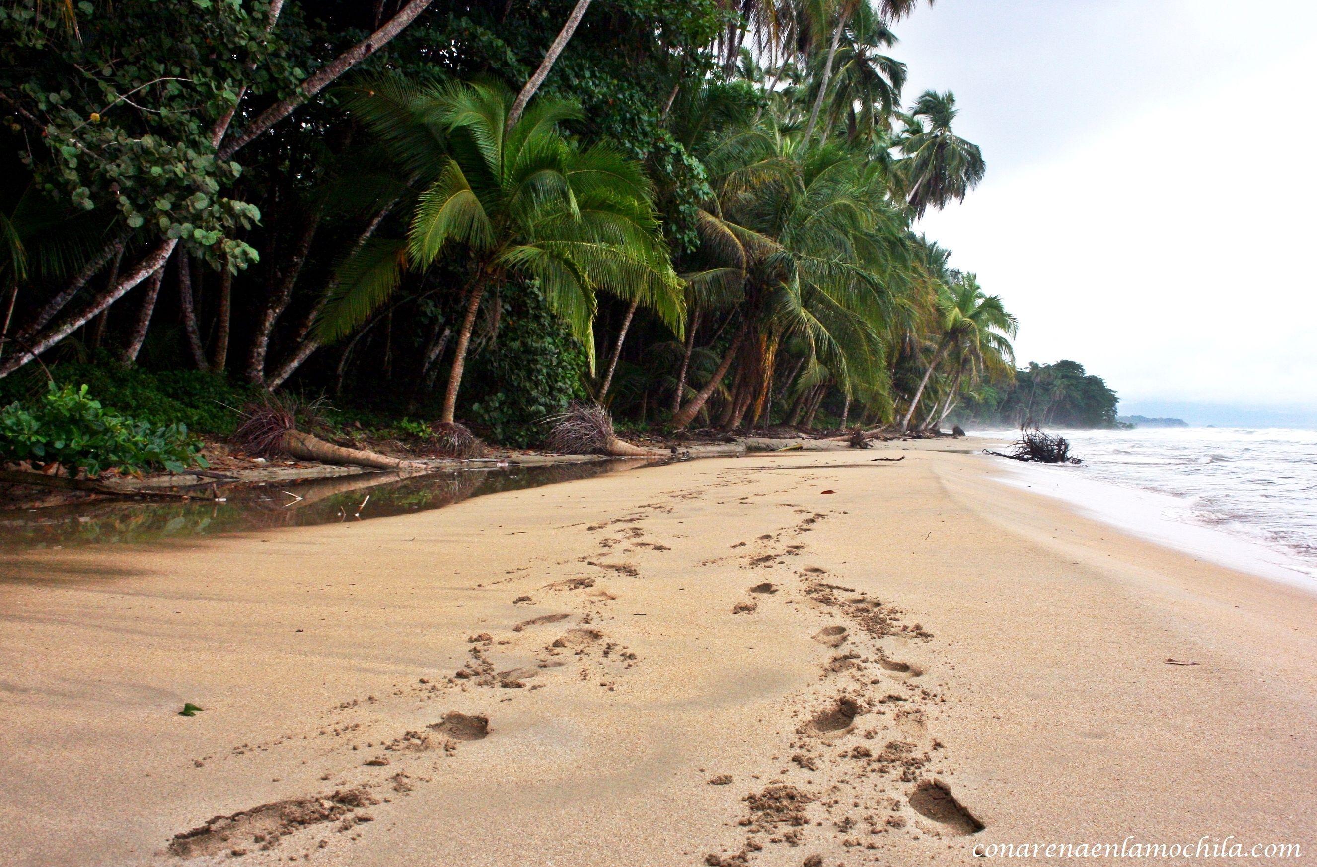 Parque Nacional de Corcovado: Un tesoro escondido en Costa Rica