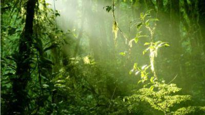 Urwald eintaschen für Parasiten-Wohnungen und Windräder-Idiotie