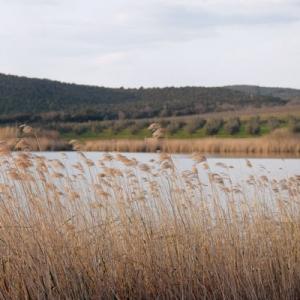 Panoramica al lago dell'Accesa