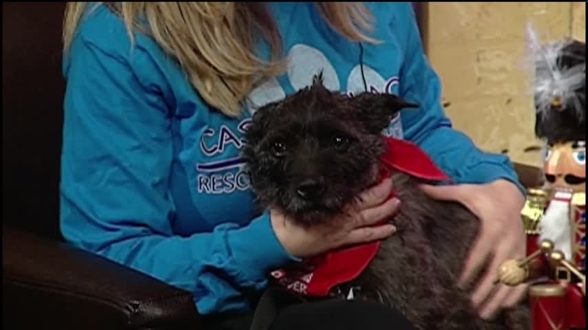 122316 Holiday Dog Adoptions at Cassie-s Place- CV Live_35037132