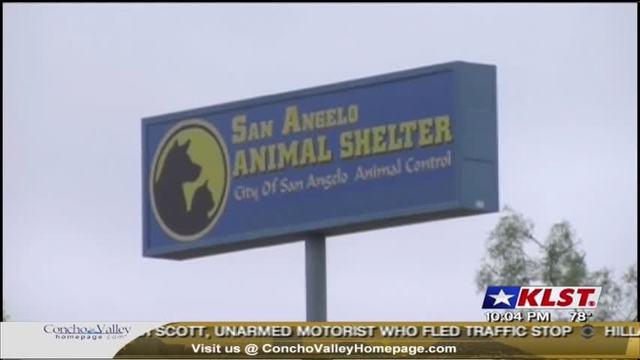 animal shelter_1494863312441.jpg