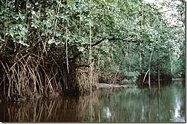 manglares Día Mundial del Medio Ambiente 2011