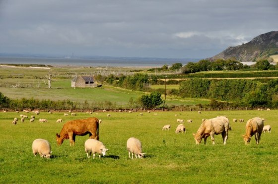 Kerry McCarthy: a force for change or out of touch with rural industry?