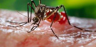 Zika virus mosquito