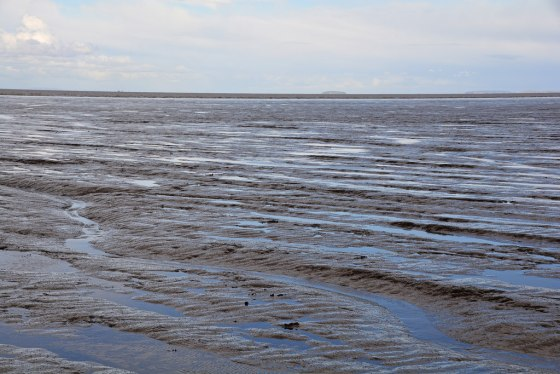 Coastal mud as key to climate cooling