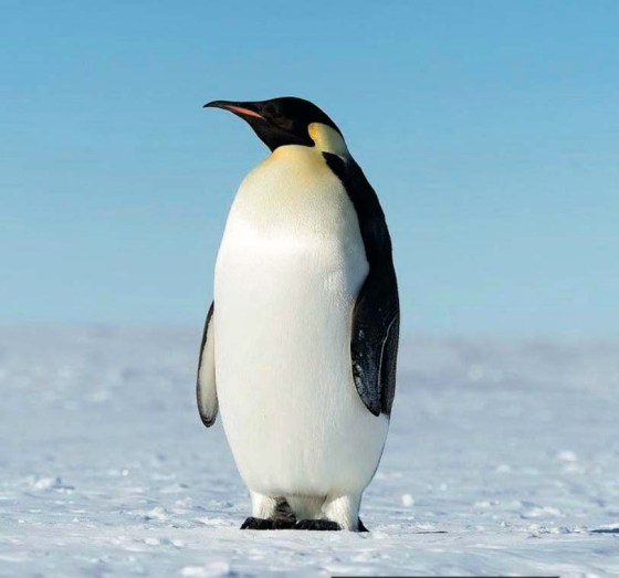 Antarctica: Tourism in the white continent