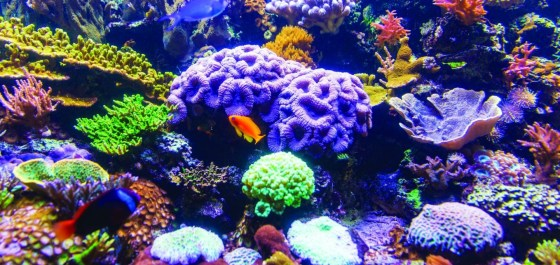 The benefits of coral farming
