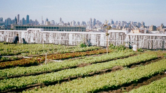 Is rooftop farming the solution to our urban agriculture problems?