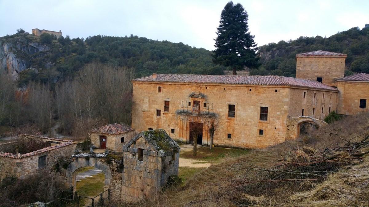 El abeto del monasterio de San Pedro de Arlanza