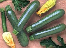 Zucchini; Courgette