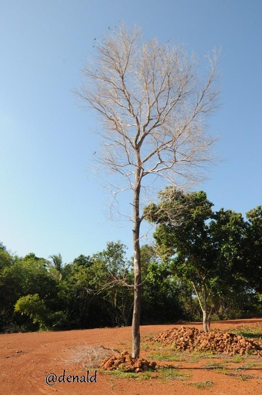 Pohon Ranting berdiri kokok diatas tanah kering