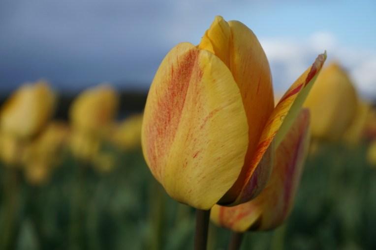 Semburat kuning dan oranye