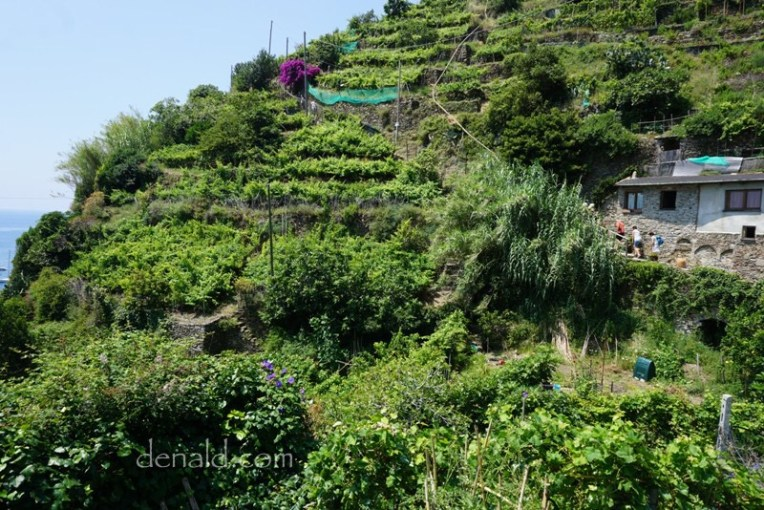 Lebaran petakilan diantara kebun anggur di atas gunung