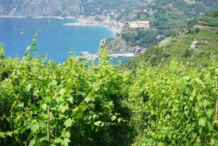 Monterosso dilihat dari kebun anggur