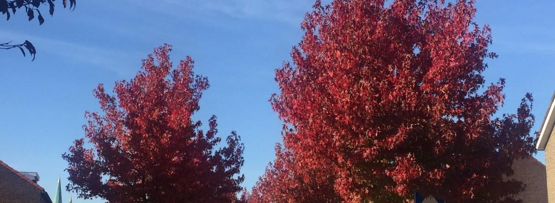 Jika terus mengingat tentang indahnya msuim panas, maka saya tidak akan bisa melihat keindahan dari musim gugur. Warna daun yang mulai berubah dan langit yang masih cerah