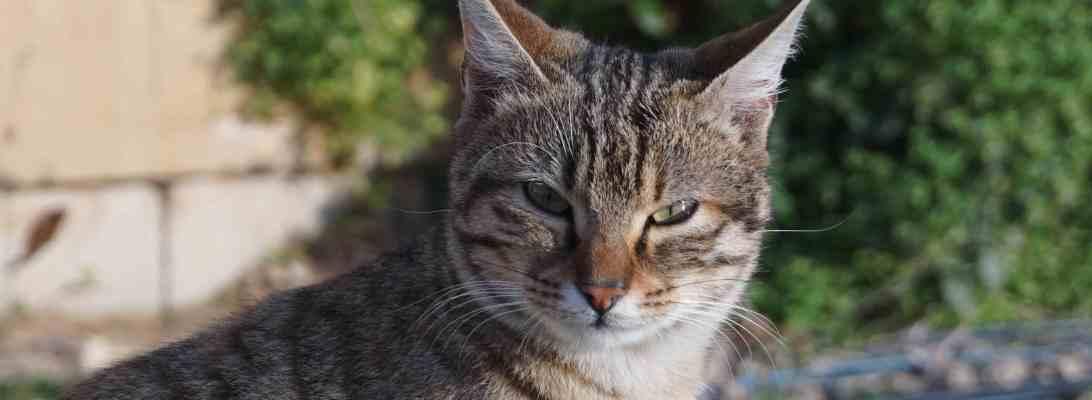 Iseng motoin kucing yang selalu ngintilin kami kalau akan sarapan