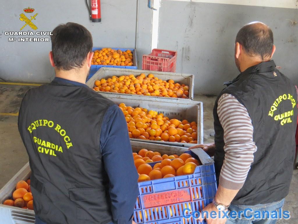 La Guardia Civil detiene a cuatro personas por la sustracción de más de 136.000 kilos de naranjas en la comarca de la Costera