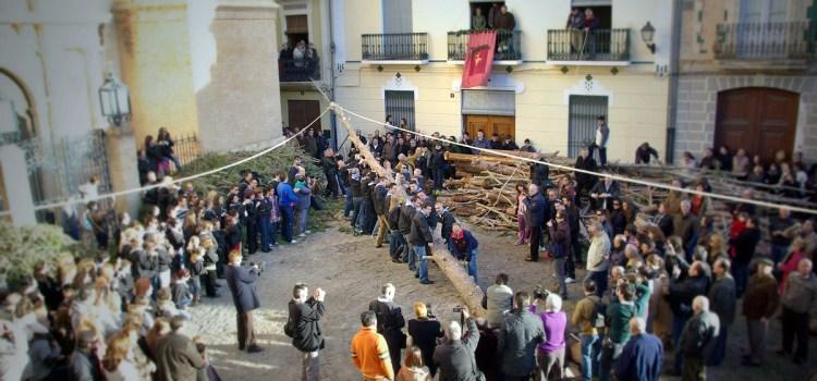 Fotos de la Plantá del pi de la foguera de 2010