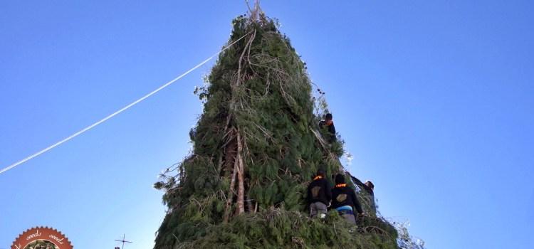 Sant Antoni 2017 foguera 12 de gener