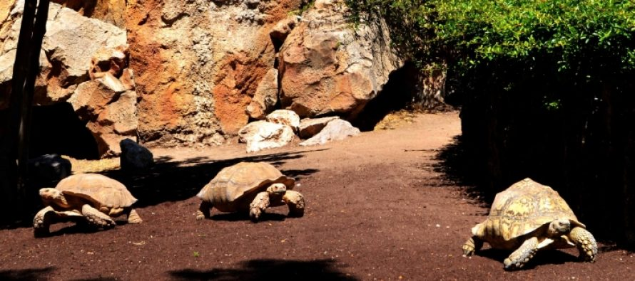 BIOPARC Valencia acogerá la 9ª Convención Europea de especialistas en tortugas de agua dulce