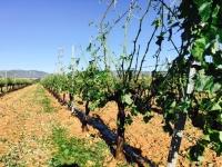 El pedrisco afecta a más de 10.000 hectáreas de cultivo y causa pérdidas de 15 millones de euros