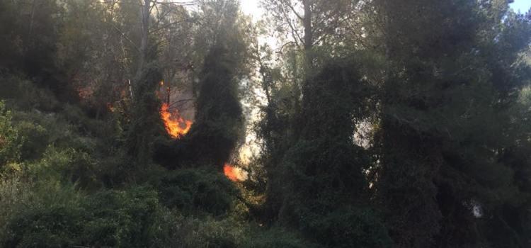 Un piròman provoca un cremat d'1 hectàrea de bosc al naixement del riu Sants de l'Alcudia de Crespins