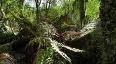 Descubriendo los Bosques del Champaquí