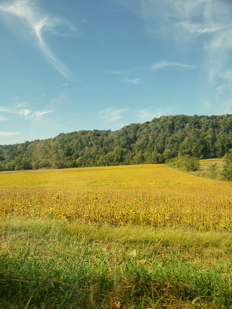 View of cornfield in Kentucky hills
