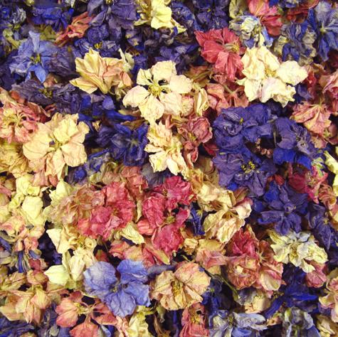 Delphinium flowerheads confetti