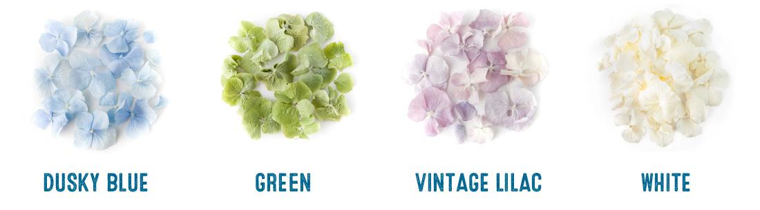 hydrangea petals colour chart