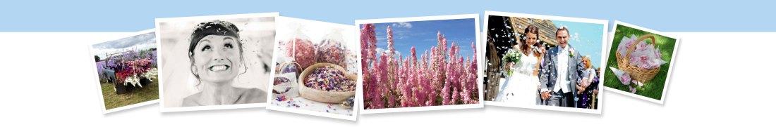 real flower petal confetti banner - confetti flower field