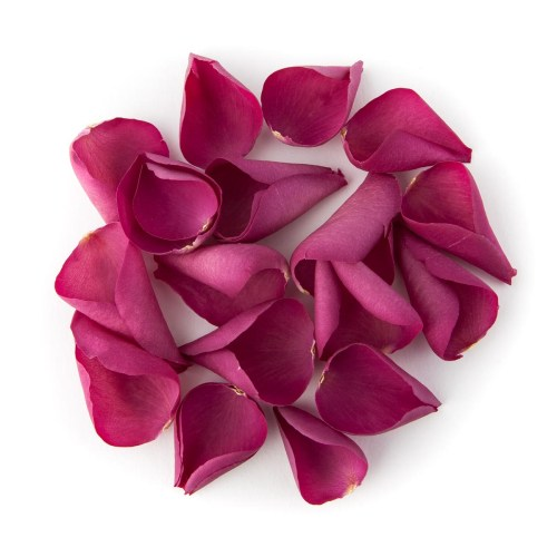 Cerise Pink Rose Petals