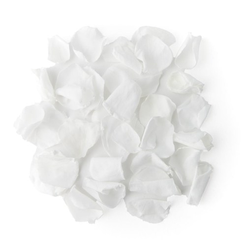 White Coloured Rose Petal