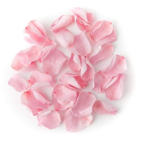 Light Pink Coloured Rose Petal