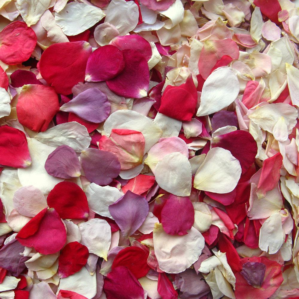 rainbow small natural rose petals confetti petals real flower petal confetti