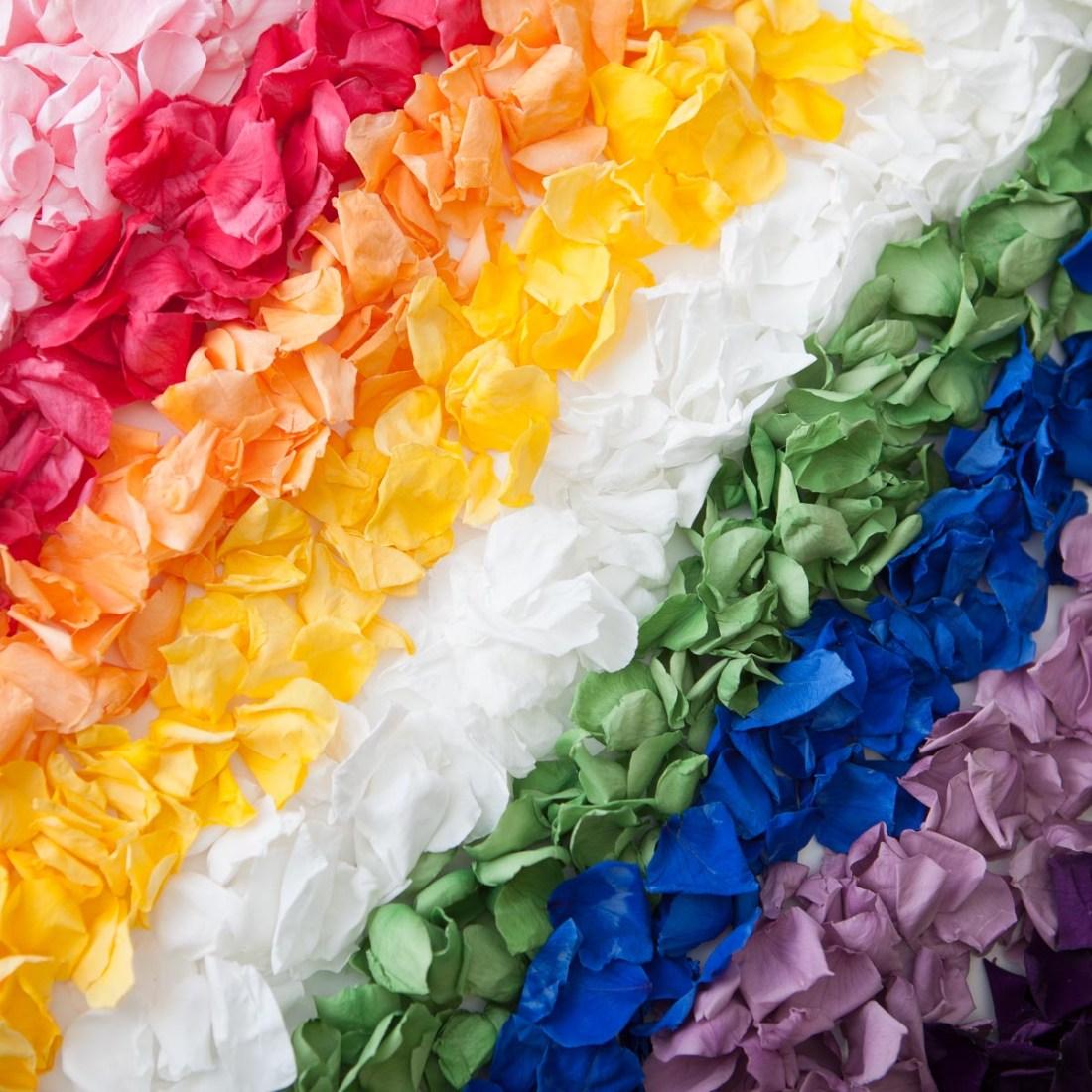 Rose Petals - a Coloured Rose Petals rainbow