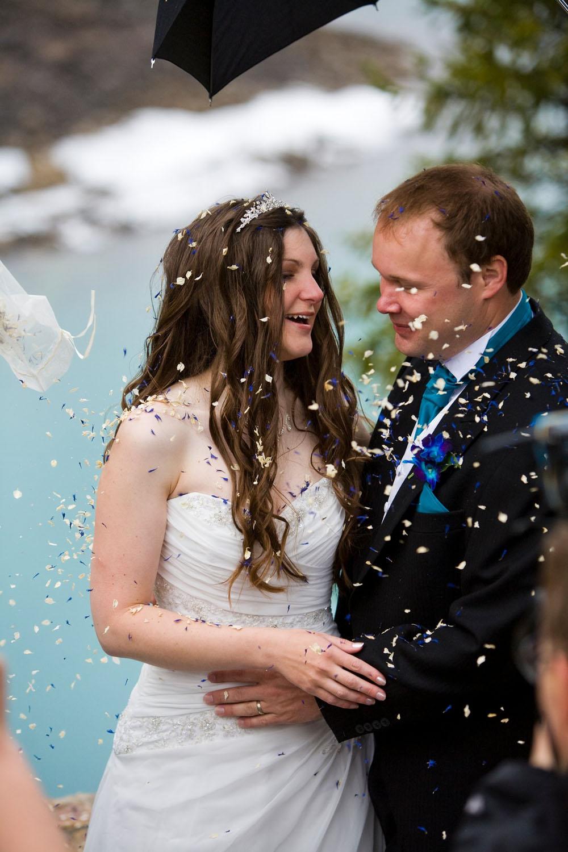 Christmas wedding confetti - delphinium petal confetti