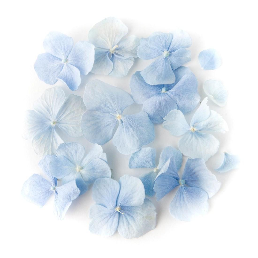 Flower petals - wedding aisles and petal pathways: Dusky Blue Hydrangea Petals