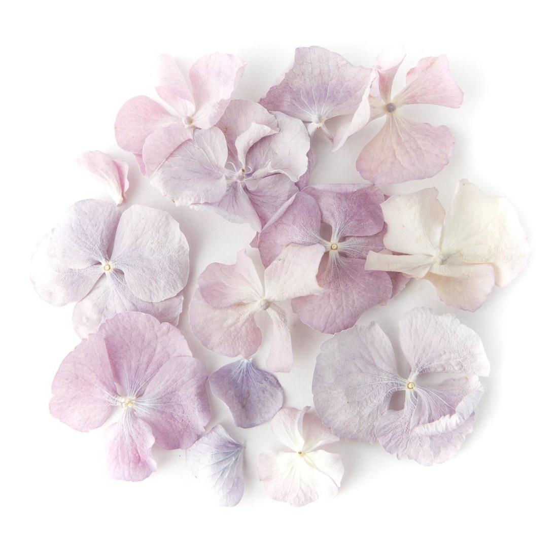 Flower petals - wedding aisles and petal pathways: Vintage Lilac Hydrangea Petals