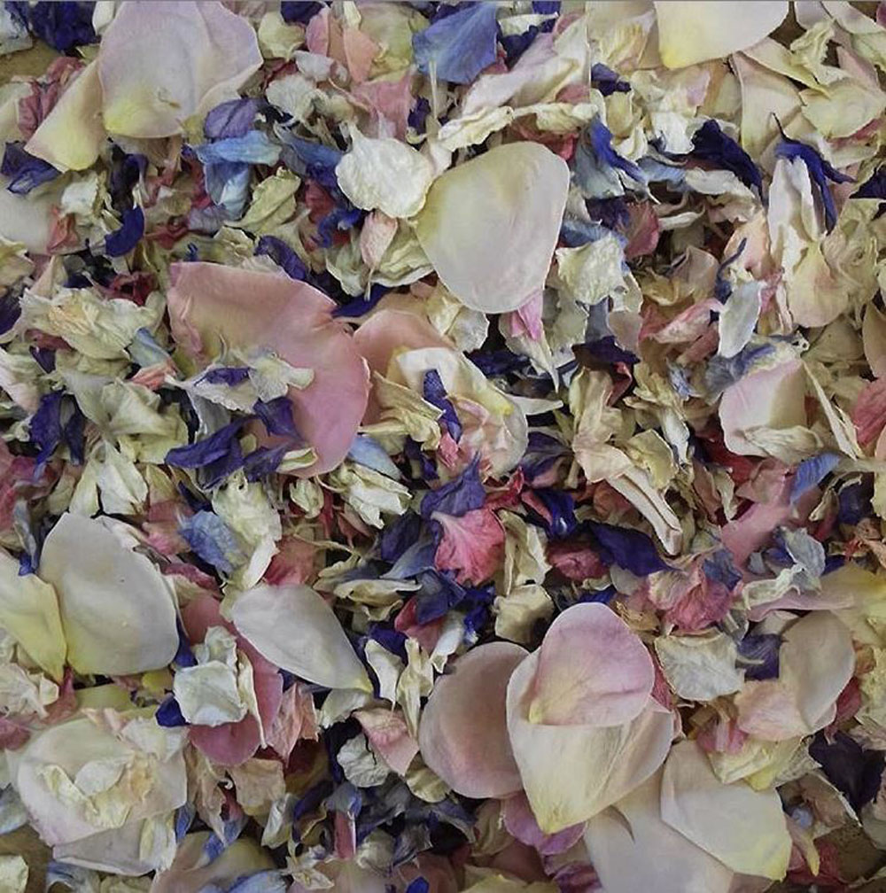 Petal Confetti - Rainbow Delphiniums Petals and Blushing Pink Small Natural Rose Petals