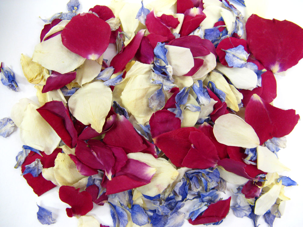 Petal Confetti -Azure Blue Delphiniums with Cream and Bright Red Small Natural Rose Petals Rose Petals