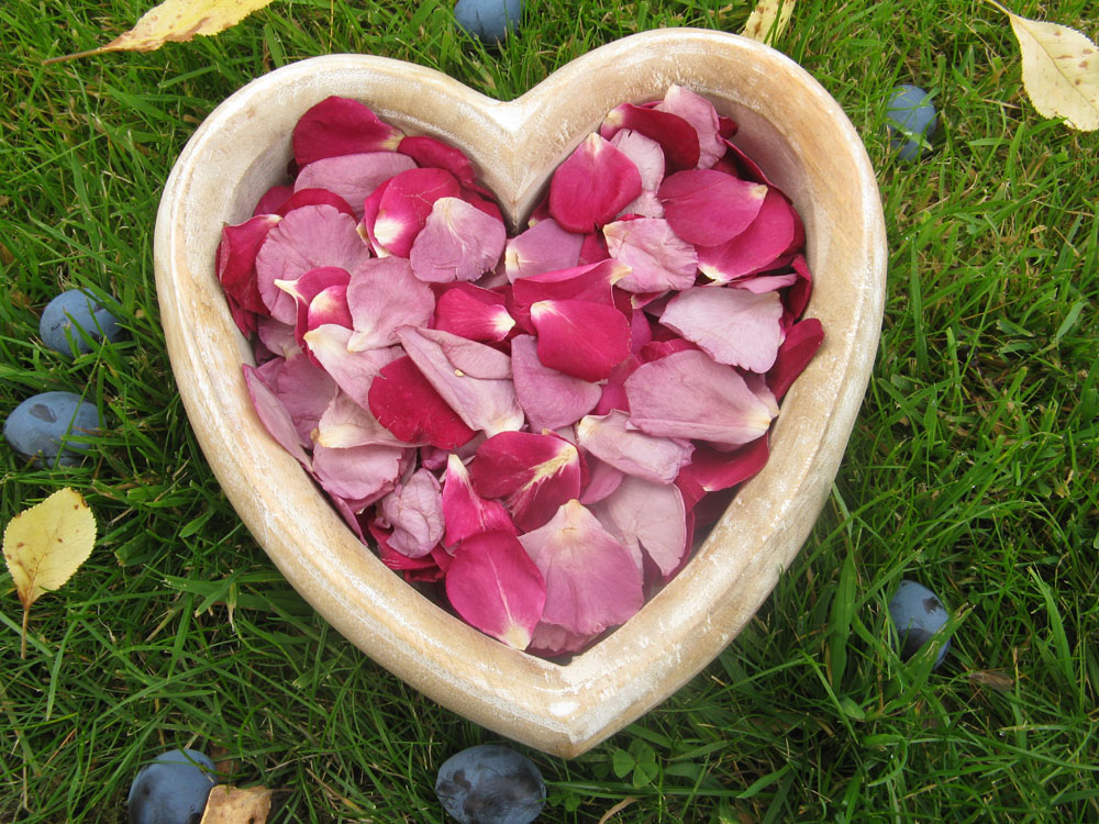 Petal Confetti - Small Natural Rose Petals Merlot and Lilac
