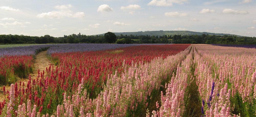 The Confetti Flower Field